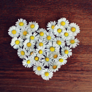 Daisy heart meaning connection